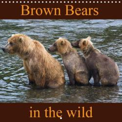 Brown Bears in the wild ...