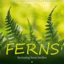 FERNS fascinating forest dwellers (Wall Calendar 2019 300 × 300 mm Square)