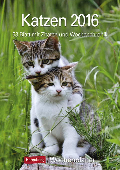 katzen 2016 katzen wochenplan von kvh kalender. Black Bedroom Furniture Sets. Home Design Ideas